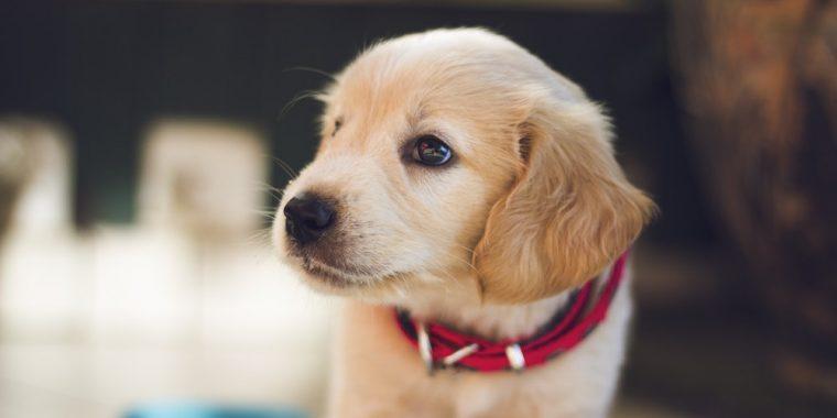 pet health insurance Newtown PA